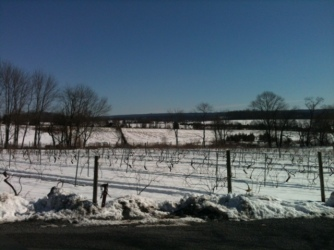 ChrisRedding vineyard